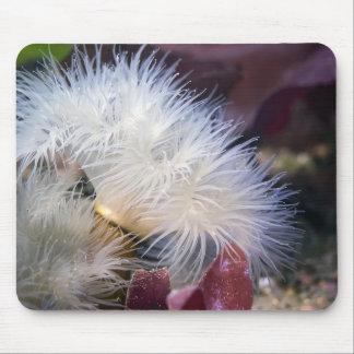 Anémona plumosa - Mousepad Alfombrilla De Ratón