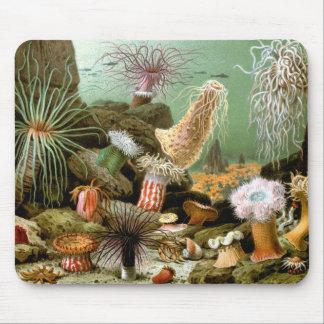 Anémonas de mar del vintage, animales de la vida alfombrilla de ratón