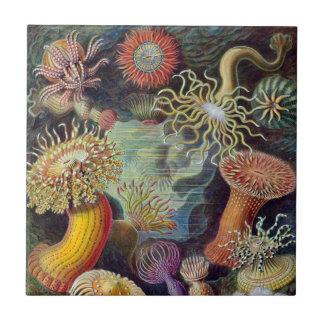 Anémonas de mar subacuáticas del vintage de Ernst Azulejo Cuadrado Pequeño
