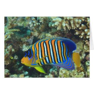 Angelfish real juvenil Pygoplites Tarjeta De Felicitación