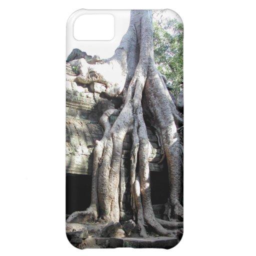 Angkor Wat arruina el árbol