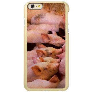 Animal - cerdo - comida de la comodidad