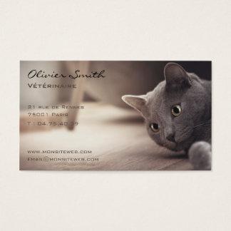 Animal de compañía, bonito gato tarjeta de visita