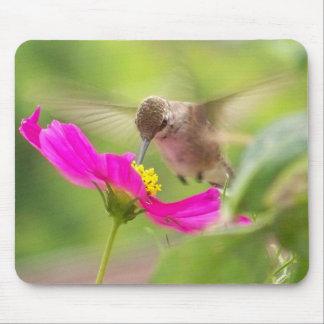 Animal de la fauna del pájaro del colibrí floral alfombrilla de ratón