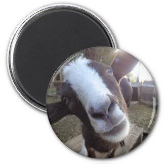 Animal del campo del corral de la cabra imán