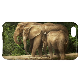 Animal - elefante - familia muy unida