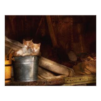 Animal - gato - cubo de diversión folleto 21,6 x 28 cm