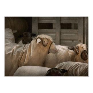 Animal - oveja - la orden anuncio