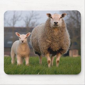 Animales del campo de las ovejas y del cordero alfombrilla de ratón