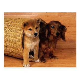 Animales, perritos lindos postal