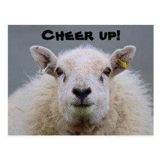 ¡Anime para arriba! Postal divertida de las ovejas