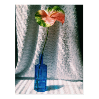 Anthurium y todavía de la botella vida azul postal