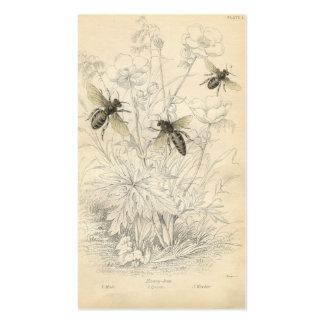 Anuncio del vintage, abejas tarjetas de visita