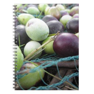 Apenas aceitunas escogidas en la red durante cuaderno