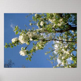 Apfelblüten Posters