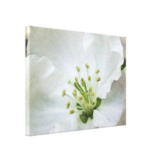 Apple blanco florece primer impresión en tela