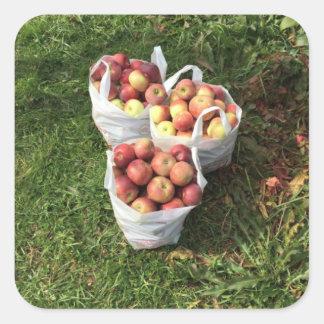 Apple que escoge otoño cae pegatina