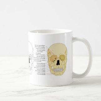 Aprenda el cráneo: Diagramas humanos del cráneo de Taza De Café