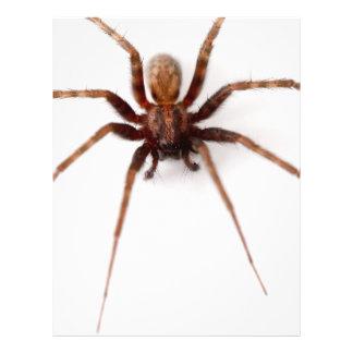 Araña asustadiza grande tarjetas informativas
