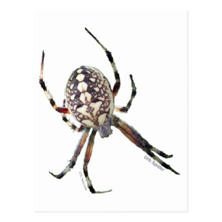 Araña del orbe postal