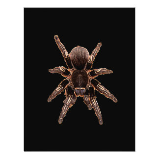 Araña del Tarantula Tarjetas Publicitarias