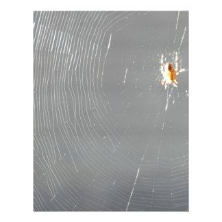 araña en el sol folleto 21,6 x 28 cm