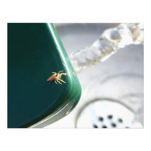 Araña en foutain del agua tarjetón