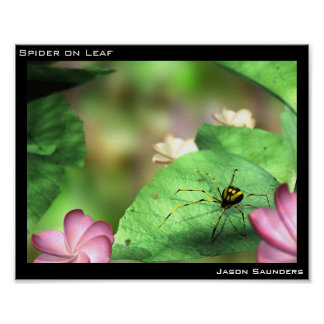 Araña en la hoja póster