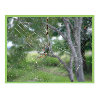 Araña gorda en el tamaño real Ab de la pensión de  Postal