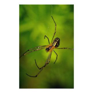 araña Largo-jawed del tejedor del orbe Flyer A Todo Color