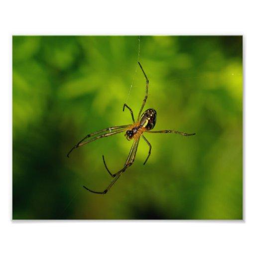 araña Largo-jawed del tejedor del orbe Fotografía