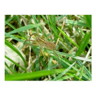 Araña que vaga en hierba postal