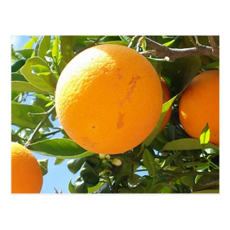 Árbol anaranjado - España, postal