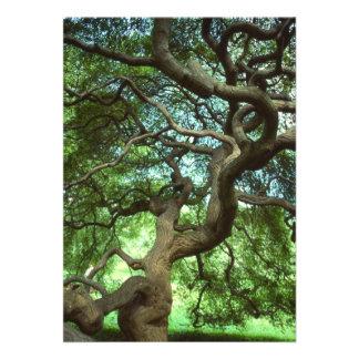 Árbol con la invitación torcida de las ramas