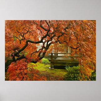 Arte p sters y lienzos rbol de arce for Arbol rojo jardin