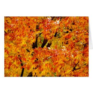 Árbol de arce en la caída tarjeta