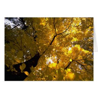 Árbol de arce grande colorido en la caída tarjeta