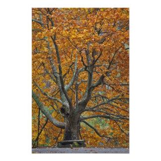 Árbol de arce grande en otoño, lago bajo, cerca fotografías