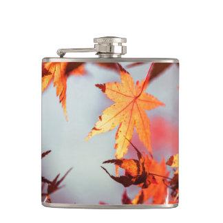 Árbol de arce rojo de las hojas de otoño de la petaca