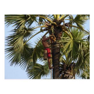 Árbol de coco postal