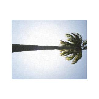 Árbol de coco y lona del Caribe del profesional de Lienzo