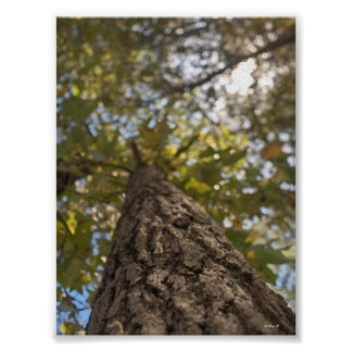 árbol de doblez posters