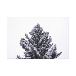 Árbol de hoja perenne Nevado Impresión En Lienzo