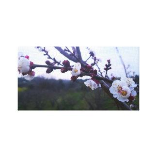 Árbol de la primavera lienzo