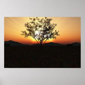 """Árbol de la puesta del sol - 19"""" x 13"""" poster"""