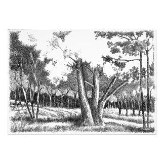 Árbol de la vida foto