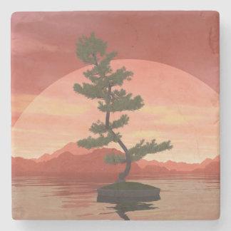 Árbol de los bonsais del pino escocés - 3D rinden Posavasos De Piedra