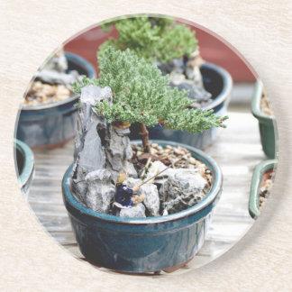 Árbol de los bonsais posavasos de arenisca