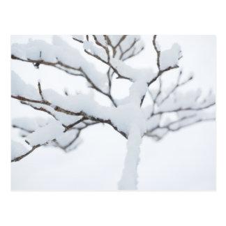 Árbol del invierno de las ramas de la nieve Nevado Postal