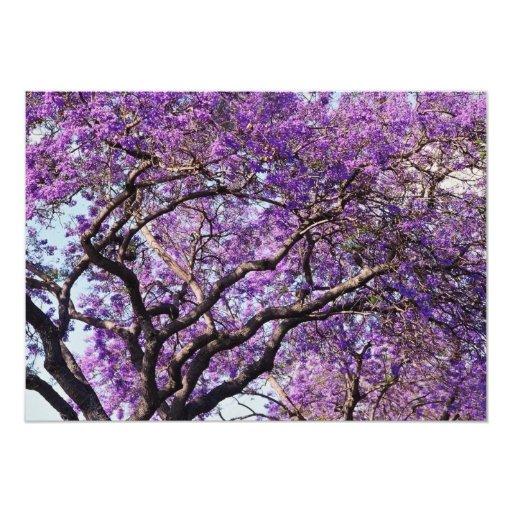 Árbol del Jacaranda en flores de la floración de Invitación 12,7 X 17,8 Cm